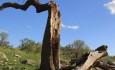 خشکیدگی جنگل