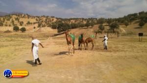 گزارش تصویری مراسم بازسازی عید غدیر خم در روستای تمنک از توابع بخش پاتاوه شهرستان دنا (۲۳۴)