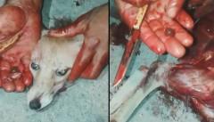 عامل سلاخی روباه چرام دستگیر شد/متخلفی که از مشکلات روحی رنج میبرد